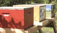 Bee boxes at Hawk's Landing Golf Club in Orlando, Fla.