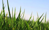 Turfgrass photo (small)